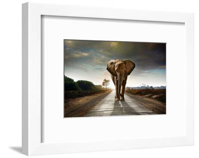 Walking Elephant-ccaetano-Framed Photographic Print