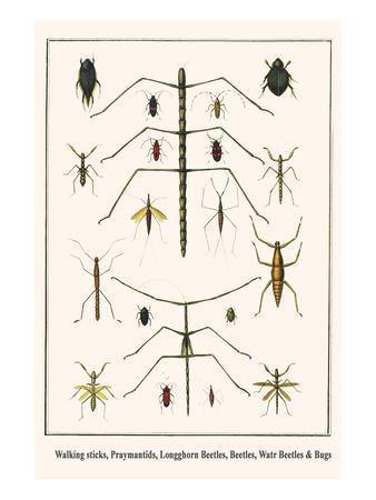https://imgc.artprintimages.com/img/print/walking-sticks-praymantids-longghorn-beetles-beetles-watr-beetles-and-bugs_u-l-pggrgt0.jpg?p=0