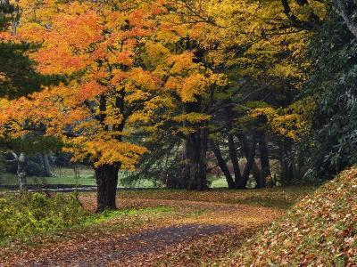 Walking Trail around Bass Lake in the Autumn, Blowing Rock, North Carolina, USA-Adam Jones-Photographic Print