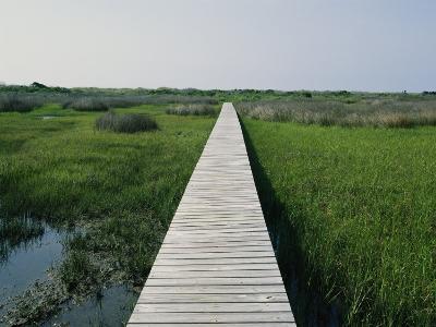 Walkway Above Wetlands-Stephen Alvarez-Photographic Print