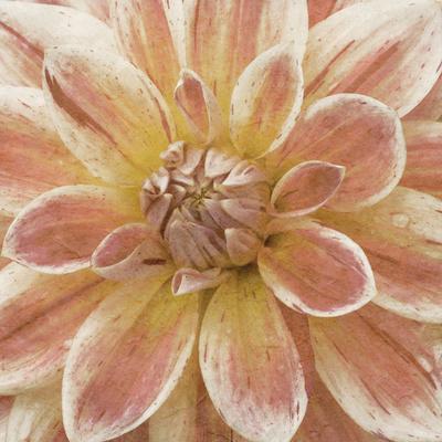 https://imgc.artprintimages.com/img/print/wall-flower-v_u-l-q1bn6hg0.jpg?p=0