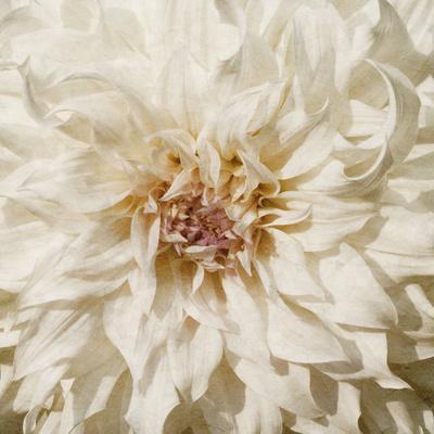 https://imgc.artprintimages.com/img/print/wall-flower-viii_u-l-q1bn5dl0.jpg?p=0