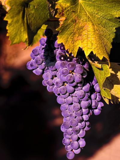 Walla Walla Wine Country, Walla Walla, Washington, USA-Richard Duval-Photographic Print
