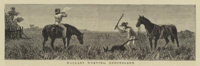 Wallaby Hunting, Queensland--Giclee Print