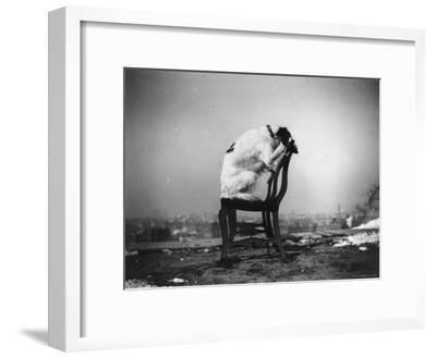 H.B. Leckler's Dog Mace Posing Atop a Chair Outdoors in Ft. Greene, Brooklyn, NY