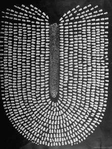 Good Kernels from a Sample Ear of Corn in a Laboratory by Wallace Kirkland