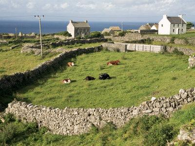 https://imgc.artprintimages.com/img/print/walled-fields-inishmore-aran-islands-county-galway-connacht-eire-republic-of-ireland_u-l-p1gp0b0.jpg?p=0