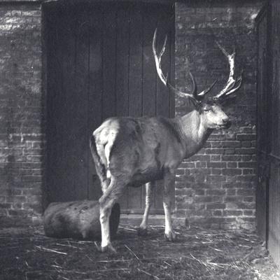 https://imgc.artprintimages.com/img/print/wallich-s-deer_u-l-pukiyb0.jpg?p=0