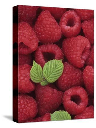 A Harvest of Raspberries