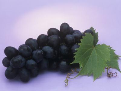 Black Seedless Grapes, Black Beauty Variety (Vitis) by Wally Eberhart