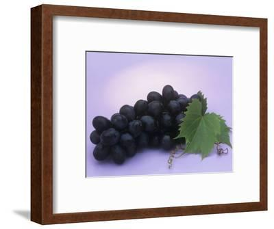 Black Seedless Grapes, Black Beauty Variety (Vitis)