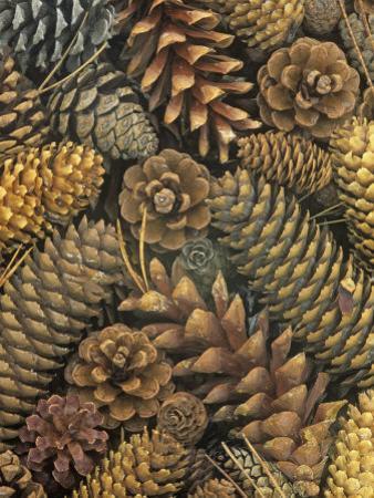Conifer Cones by Wally Eberhart