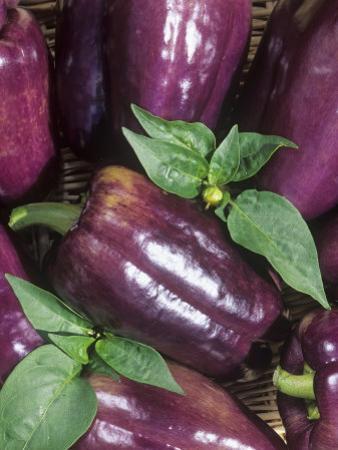 'Islander' Sweet Peppers (Capsicum Annuum) by Wally Eberhart