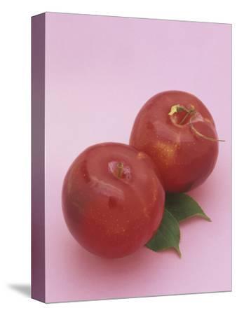 Red Plums (Prunus Domestica)