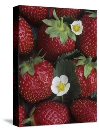 Strawberries, 'sparkle' Variety