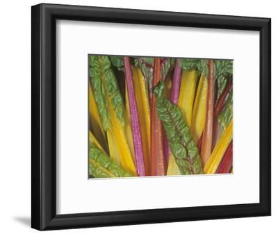Swiss Chard, Bright Lights Variety