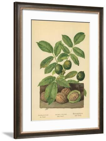 Walnut, Foliage and Fruit-William Henry James Boot-Framed Giclee Print
