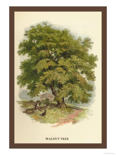 Walnut Tree-W^h^j^ Boot-Art Print
