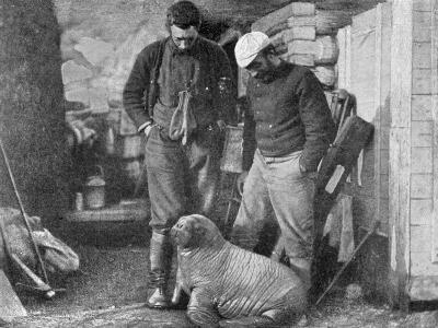 Walrus Cub, 1899-Frederick George Jackson-Giclee Print