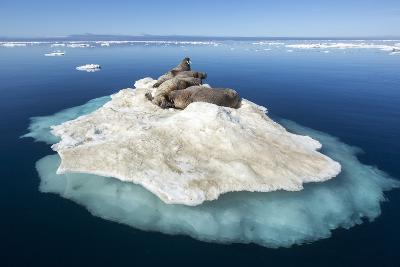 Walruses on Iceberg, Hudson Bay, Nunavut, Canada-Paul Souders-Photographic Print