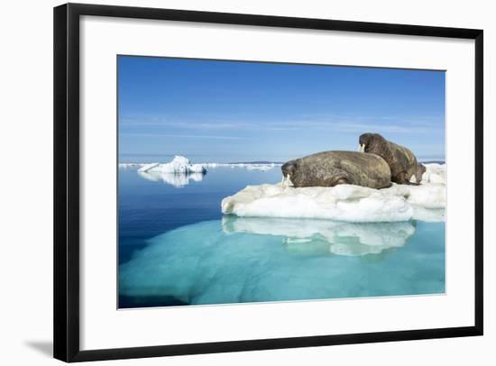 Walruses on Iceberg, Hudson Bay, Nunavut, Canada-Paul Souders-Framed Photographic Print