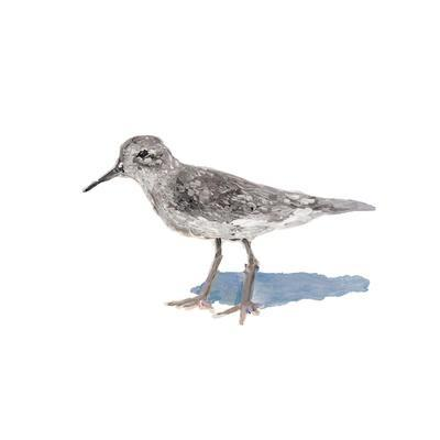 Sandpiper on White II