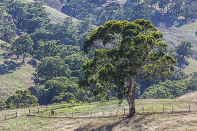Australia, Adelaide Hills, Landscape