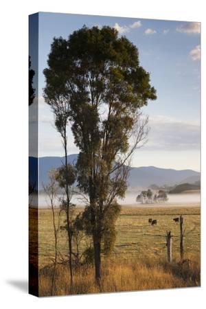 Australia, Victoria, Yarra Valley, Healesville, Field with Fog, Dawn