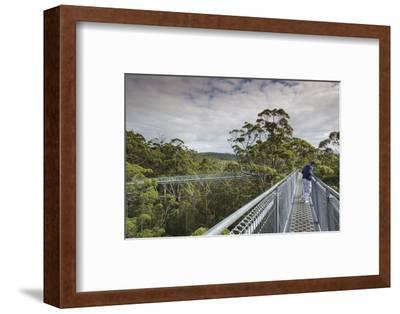 Australia, Walpole Nornalup, Valley of the Giants Tree Top Walk