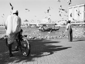 Birds and Watcher, Dubai Creek, Dubai by Walter Bibikow