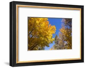 Canada, Prince Edward Island, Tyne Valley autumn foliage. by Walter Bibikow