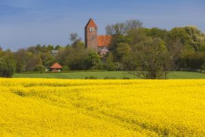 Denmark, Mon, Magleby, Town Church and Rapeseed Field, Springtime, Dawn by Walter Bibikow