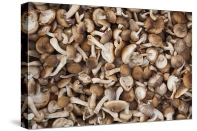 Denmark, Zealand, Copenhagen, Torvehallerne Kph, Mushrooms