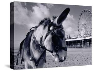 Donkey at Shorefront, Blackpool, England by Walter Bibikow