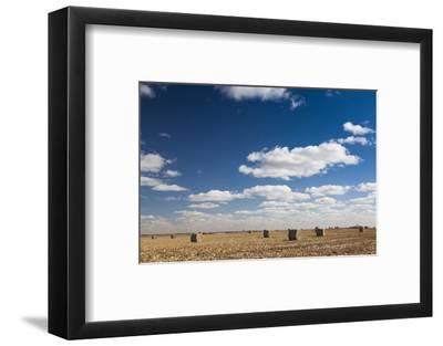 Farm Field, Sioux Falls, South Dakota, USA