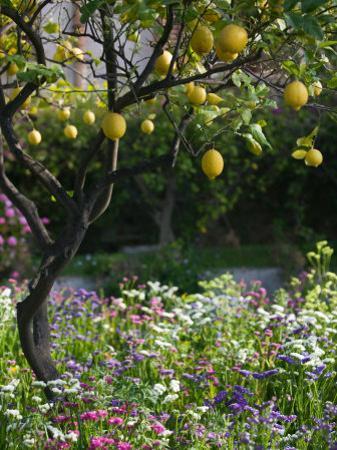 Garden Detail, San Domenico Palace Hotel, Taormina, Sicily, Italy