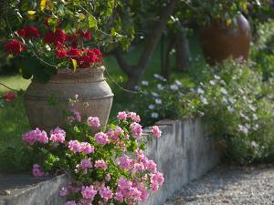 Garden Detail, San Domenico Palace Hotel, Taormina, Sicily, Italy by Walter Bibikow