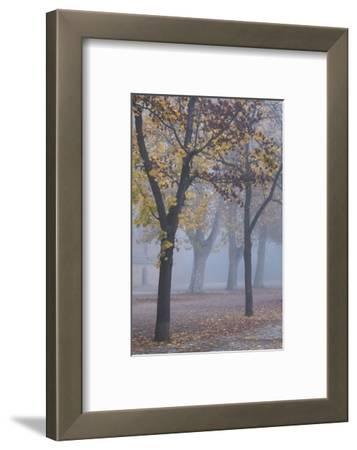 Germany, Rhineland-Pfalz, Speyer, Domgarten, Cathedral Park with Morning Fog