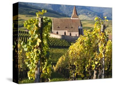 Hunawihr, Alsatian Wine Route, Alsace Region, Haut-Rhin, France