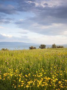 Israel, the Galilee, Tiberias, Sea of Galilee-Lake Tiberias by Walter Bibikow