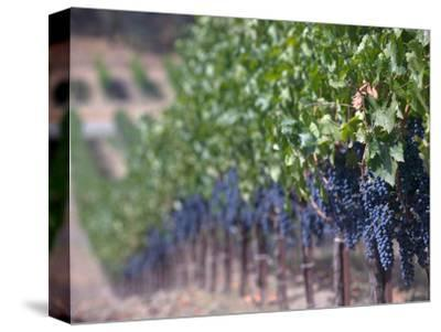 Joseph Phelps Winery and Vineyard, Deer Park, Napa Valley, California