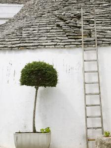 Ladder and Potted Tree, Trulli Houses, Alberobello, Puglia, Italy by Walter Bibikow