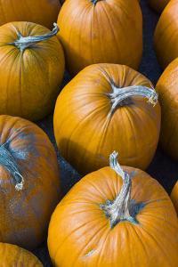 Massachusetts, Salisbury, Pumpkins, Autumn by Walter Bibikow