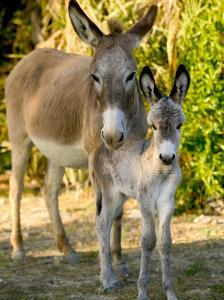 Mother and Baby Donkeys on Salt Cay Island, Turks and Caicos, Caribbean by Walter Bibikow