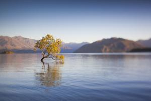 New Zealand, South Island, Otago, Wanaka, Lake Wanaka, solitary tree, dawn by Walter Bibikow