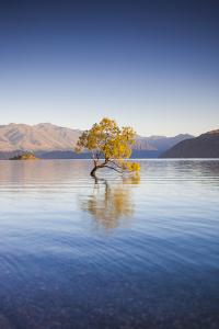 New Zealand, South Island, Otago, Wanaka, Lake Wanaka, solitary tree, dawn by Walter Bibikow