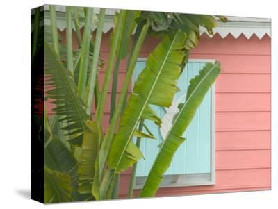 Palm and Pineapple Shutters Detail, Great Abaco Island, Bahamas