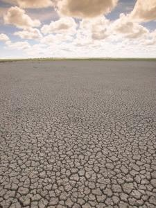 Parched Earth, Etosha National Park, Namibia by Walter Bibikow