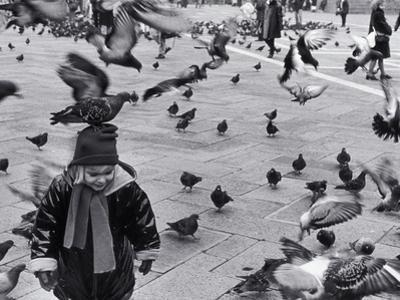 Pigeons in Piazza San Marco, Venice, Veneto, Italy