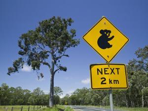 Queensland, Fraser Coast, Maryborough, Koala Crossing Sign on the Bruce Highway, Australia by Walter Bibikow